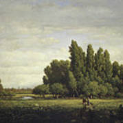 A Meadow Bordered By Trees Poster