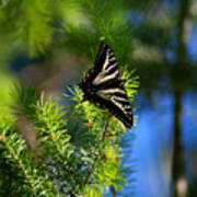 A Pale Swallowtail Vertical Poster