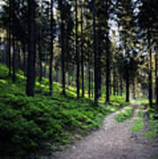 A Path Through A Dense Forest Poster