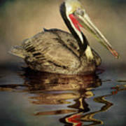 A Pelican And His Reflection Poster