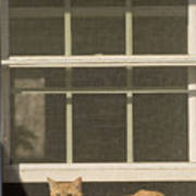 A Pet Cat Resting In A Screened Window Poster