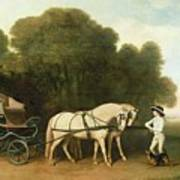 A Phaeton With A Pair Of Cream Ponies In The Charge Of A Stable-lad Poster