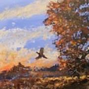 A Pheasent At Sundown Poster by Douglas Trowbridge