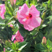 A Pink Hibiscus Poster