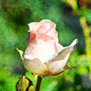 A Pink Rose With Texture Poster