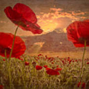 A Poppy Kind Of Morning Poster by Debra and Dave Vanderlaan
