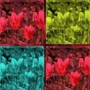 A Quadruple Of Tulips Poster