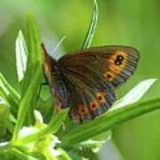 A Red Butterfly Perching  Poster