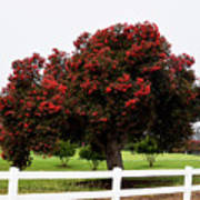 A Red Pin Under A Red Tree At Morro Bay Golf Course Poster