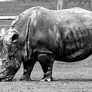 A Rhinoceros Poster