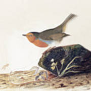 A Robin Perched On A Mossy Stone Poster