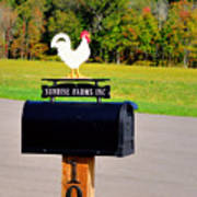 A Rooster Above A Mailbox 3 Poster