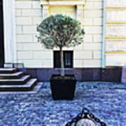 A Royal Tree Poster