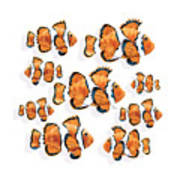 A School Of Clown Fish Poster