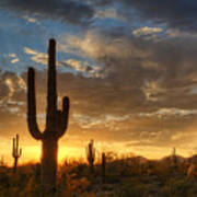A Serene Sunset In The Sonoran Desert  Poster