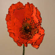A Solitary Poppy Poster