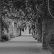 A Stroll Under The Vines Bw Poster