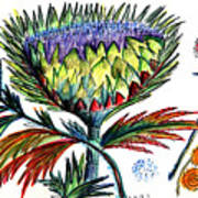 A Thistle Poster