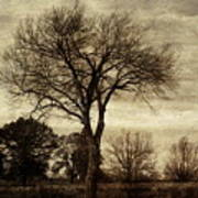 A Tree Along The Roadside Poster