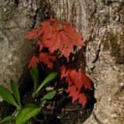 A Tree Hug Poster