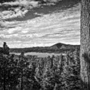 A Tree Stands Guard Over Big Bear Lake Poster