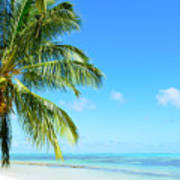 A Tropical Palm Tree Beach Poster
