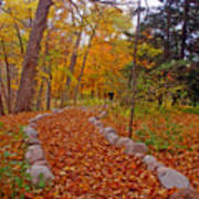 A Walk Along Natures Path Poster