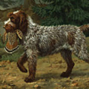 A Wire-haired Pointing Griffon Holds Poster
