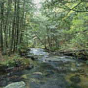 A Woodland View With A Rushing Brook Poster