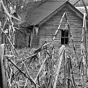 Abandoned Farmhouse Through Cornfield Poster