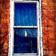 Abandoned House Window With Vines Poster
