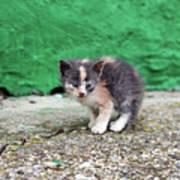 Abandoned Kitten On The Street Poster