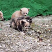 Abandoned Kittens On The Street Poster