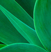 Abstract Agave Plant Poster