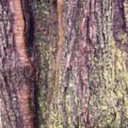 Abstract Bark 3 Poster