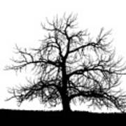 Abstract Bw Single Tree Poster
