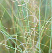 Abstract Curly Grass One Poster