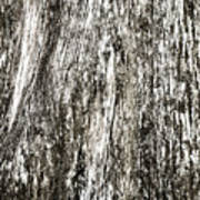 Abstract Monochrome Bark Poster