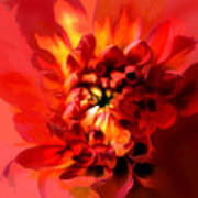 Abstract Red Chrysanthemum Poster