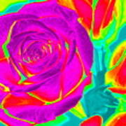 Blooming Roses Abstract Poster