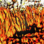 Abstract Saw Grass Iv Poster