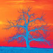 Abstract Single Tree Blue-orange Poster