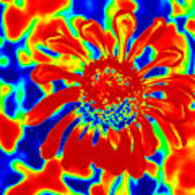 Abstract Zinnia Poster