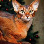 Abyssinian Cat In Christmas Tree Background Poster