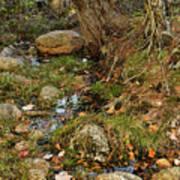 Acadia Fall Foliage Poster
