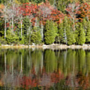 Acadia Tree Reflections Poster