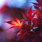 Acer Kaleidoscope Poster