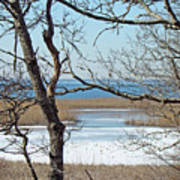 Across The Marsh To Woodneck Beach - Cape Cod Poster