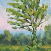 Adirondack Tree Poster