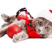 Adorable Christmas Kitten Over White Poster